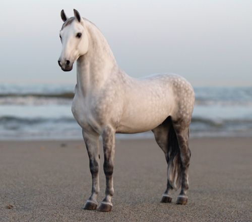 realistic horse breeds # 74