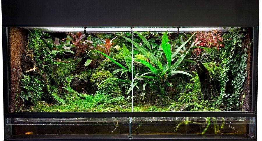 Home Decor Upgrades 7 Reptile Tank Ideas For Inspiration