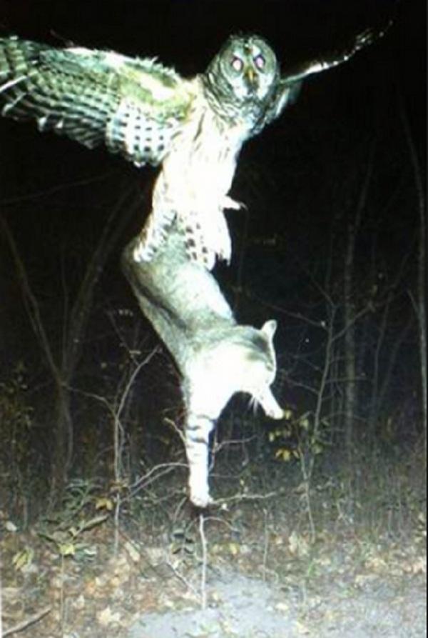 Kentucky Wild Cats Stuff