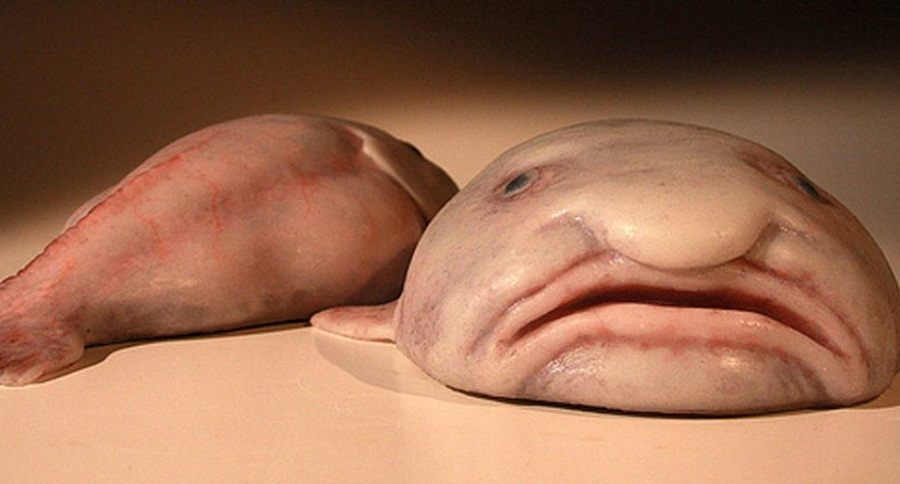 weird fish feature