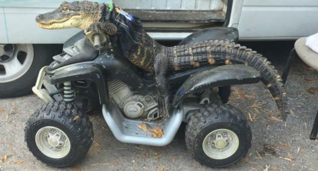 Bizarre Animal Motorcycles