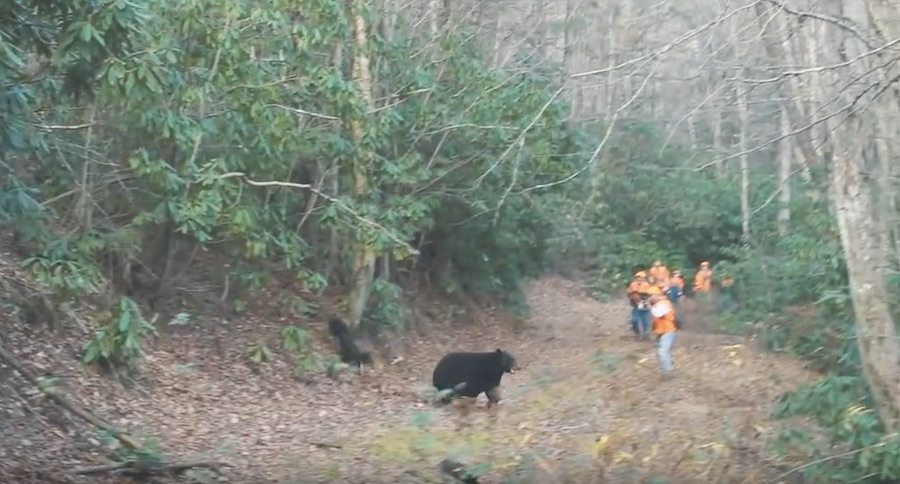 Bear Hunting Tn