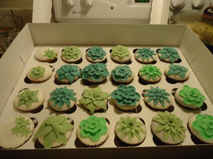 Succulent Cupcakes Cakecentral Com