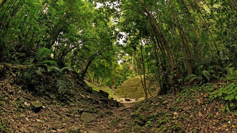William Gadoury, de 15 años, halló lo que sería una de las ciudades mayas más grandes de esa civilización. Está oculta en Belice, Yucatán