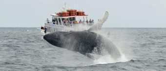 Whale Rescue Activist Killed By Whale