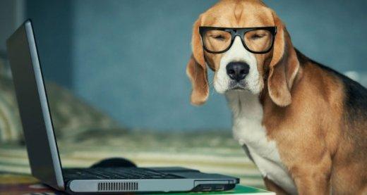 perro oficina pet friendly amas a tu perro más que nadie
