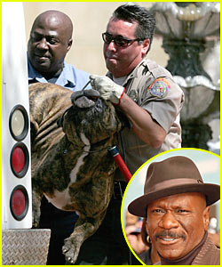Ving Rhames Deadly Dog Attack Ving Rhames Just Jared