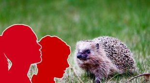 Youth gang crushed hedgehog – died with serious injuries