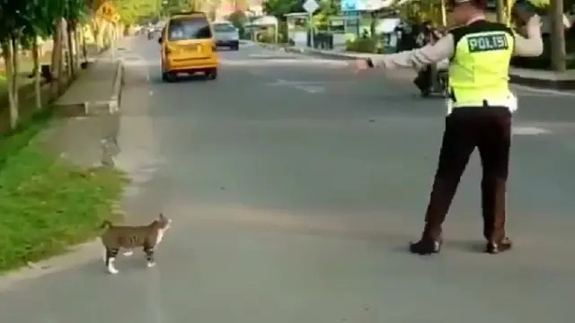 Viral Polisi Bantu Kucing Menyeberang, Aksinya Banjir Pujian Warganet