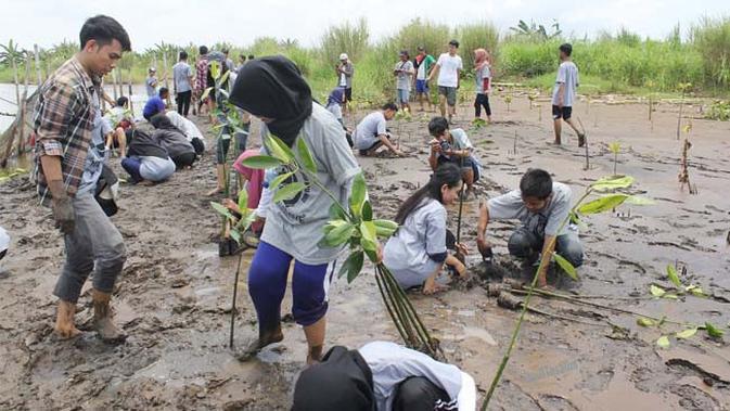 Mahasiswa Cinta Alam, Tanam 1000 Mangrove di Pantai Trisik