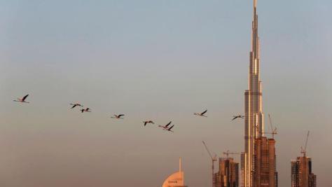 Melihat Habitat Flamingo di Tengah Mewahnya Kota Dubai
