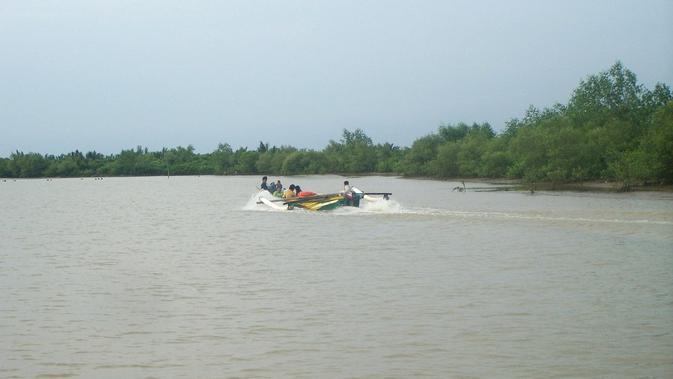 Laguna Segara Anakan, Cilacap, Jawa tengah, merupakan habitat buaya. (Foto: Liputan6.com/Muhamad Ridlo)