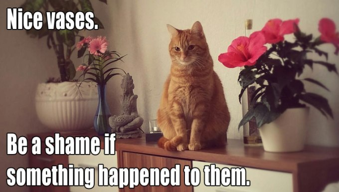 cat-owners-know-5
