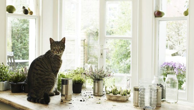 cat sitting by plants