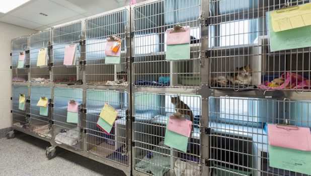 cats in a shelter