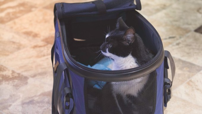 Cat arrives to new home and takes first look at surroundings