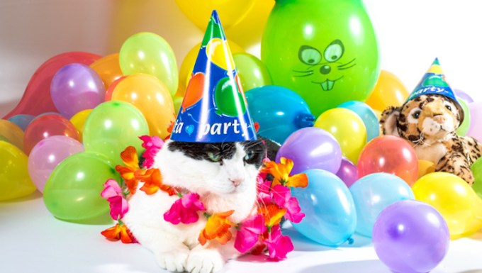 Cat celebrating make up your own holiday day