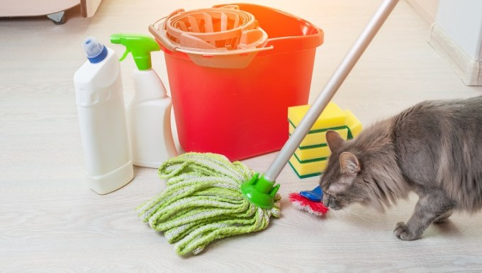 House cleaning with cat. Bucket with sponges, chemical bottles and mopping stick