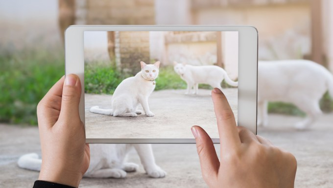 Cats being photographed