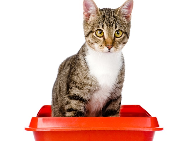 Image result for Choosing a litter for your cat's litter box