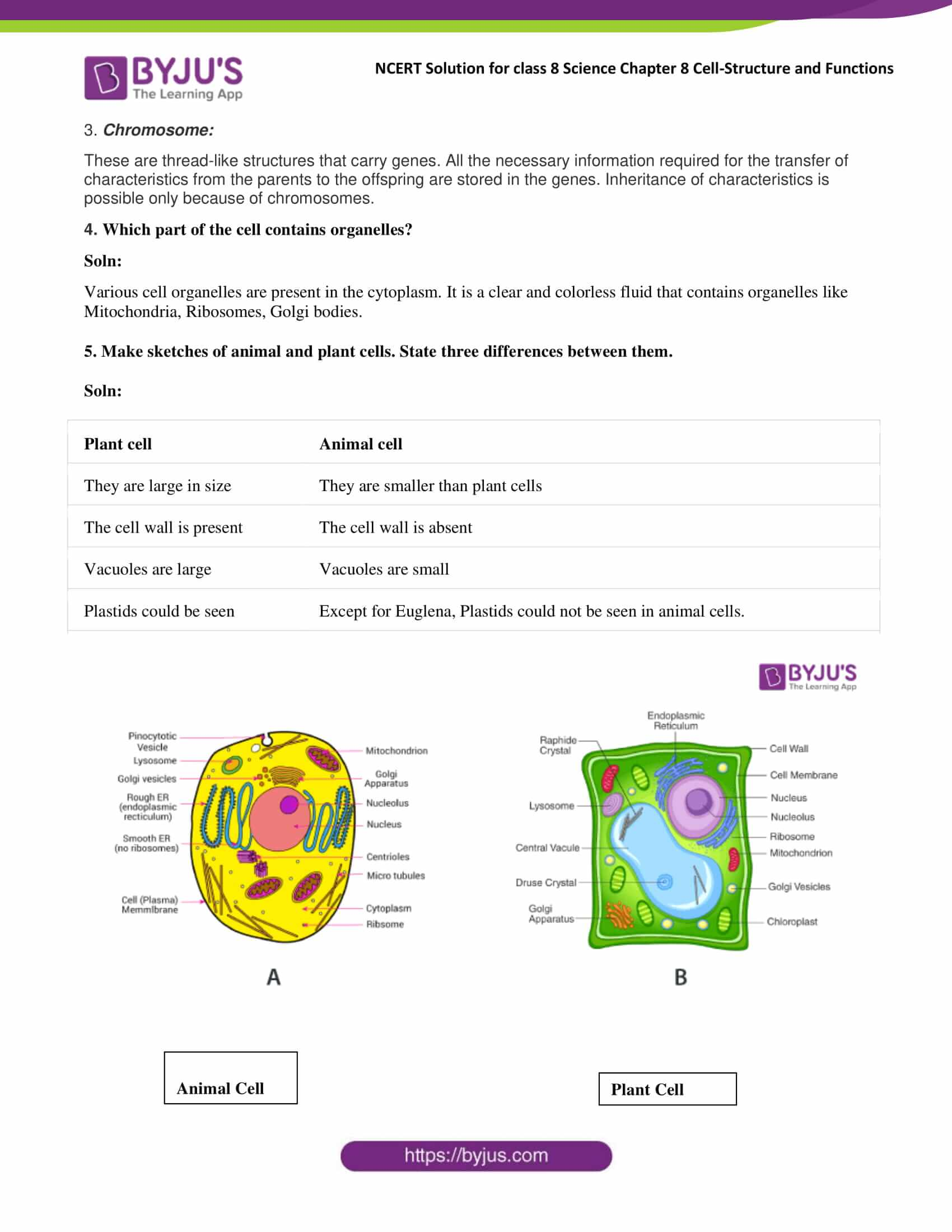 Ncert Solutions Class 8 Science Chapter 8 Cell Structure