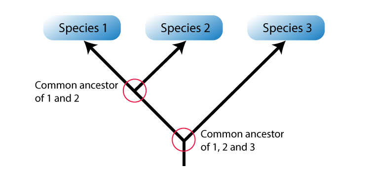 Phylogenetic System of Classification