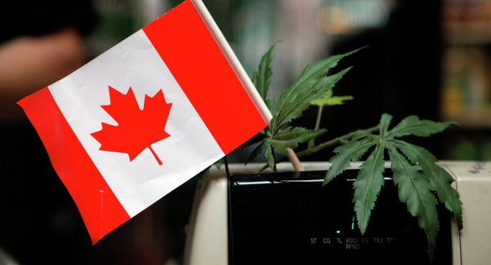 Canada's Supreme Court Rules Medical Marijuana Legal in All Forms