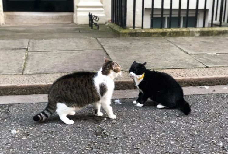Twitter Awed as Cats of Theresa May and Boris Johnson Meet in Furry Battle  - Sputnik International