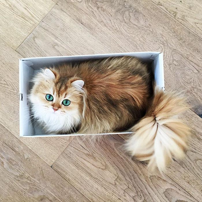 gato_fotogenico_5