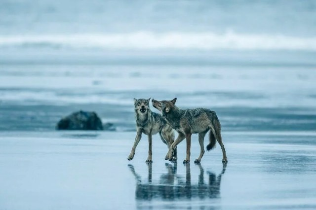 Okyanus Fotoğrafları Yarışması'nın finalistleri belli oldu - 24