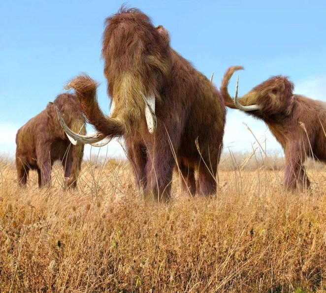 10 bin yıl önce yok olan yünlü mamutlar yeniden doğacak - 2