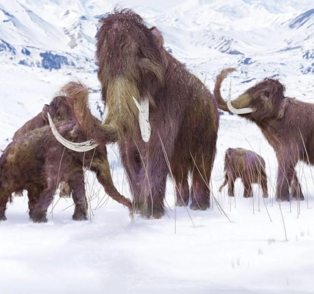 10 bin yıl önce yok olan yünlü mamutlar yeniden doğacak - 3