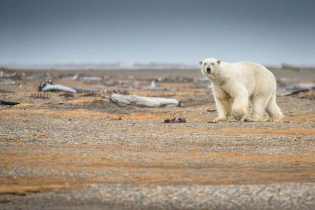 İki bini aşkın bilim insanı uyardı: Küresel ısınmada kritik eşik noktalarını geçtik - 5