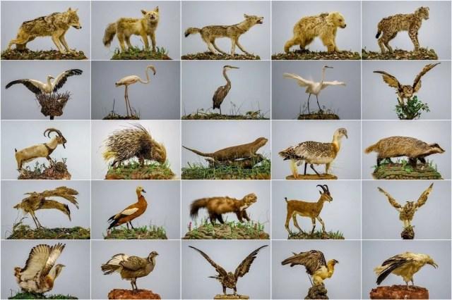 Van'da yaban hayvanları tahnit sanatıyla müzede tanıtılacak - 14
