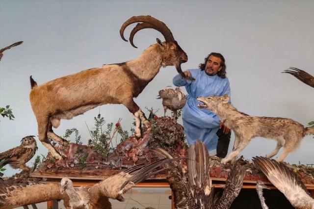 Van'da yaban hayvanları tahnit sanatıyla müzede tanıtılacak - 19