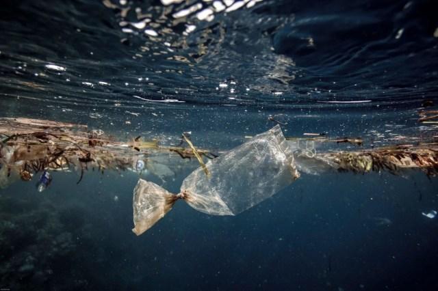 İklim değişikliği ve çevre kirliliği denizlerdeki tüm memeli türlerin yüzde 25'ini yok etmek üzere - 1