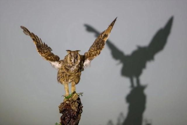 Van'da yaban hayvanları tahnit sanatıyla müzede tanıtılacak - 35