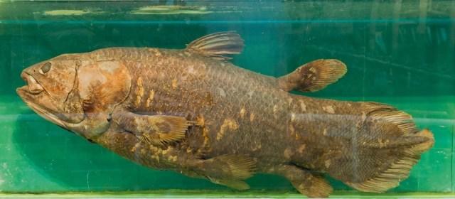 Yeni keşif: 'Yaşayan fosil' balık 100 yıl yaşıyor, hamileliği 5 yıl sürüyor - 5