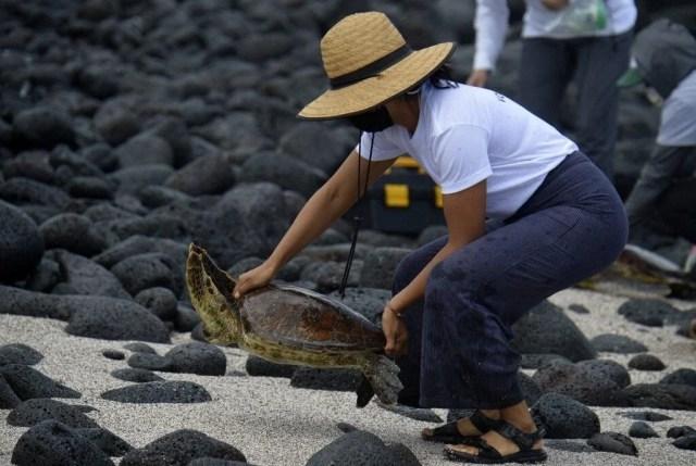 100 yıl önce soyu tükendiği düşünülen dev kaplumbağa Galapagos Adaları'nda bulundu - 3