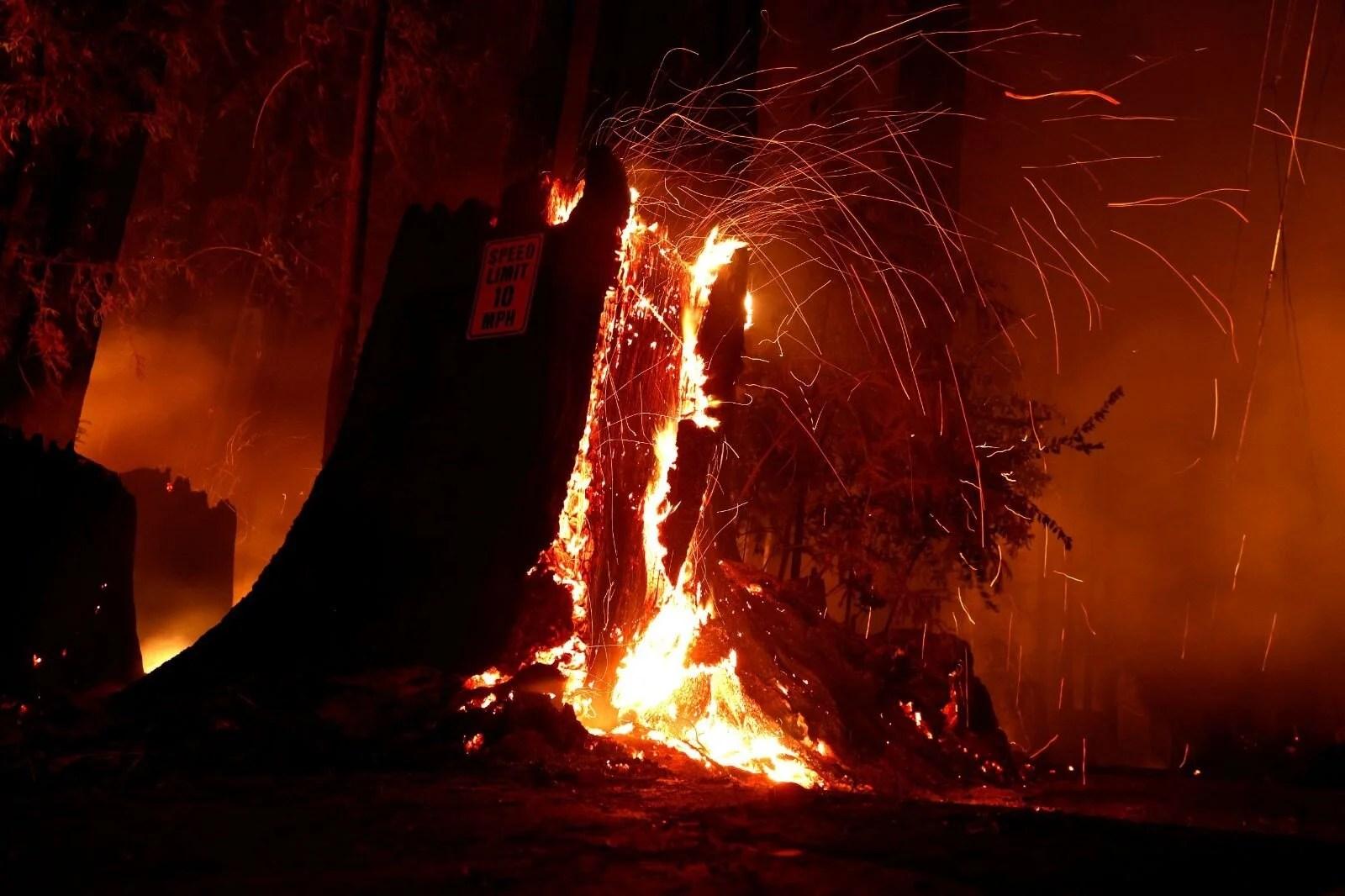 California'da 8 bin kilometrekare alan yandı, rekor kırıldı - 5