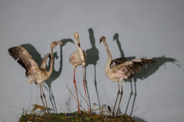 Van'da yaban hayvanları tahnit sanatıyla müzede tanıtılacak - 8