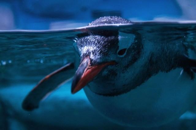 İklim değişikliği ve çevre kirliliği denizlerdeki tüm memeli türlerin yüzde 25'ini yok etmek üzere - 3