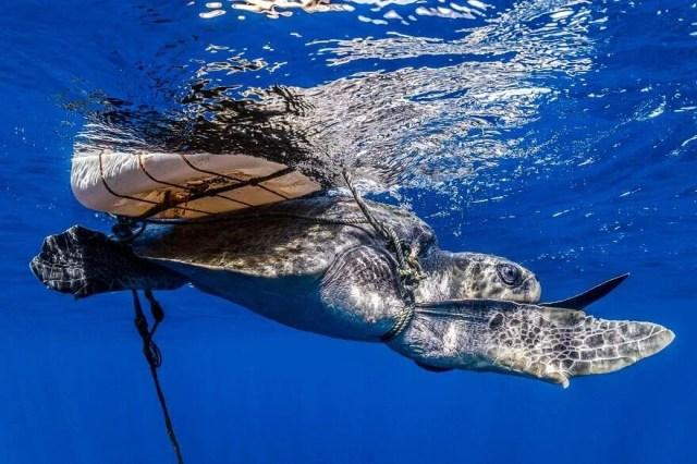 Okyanus Fotoğrafları Yarışması'nın finalistleri belli oldu - 29
