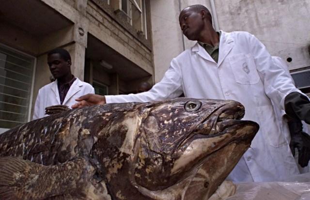 Yeni keşif: 'Yaşayan fosil' balık 100 yıl yaşıyor, hamileliği 5 yıl sürüyor - 1