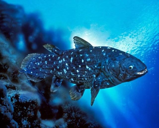Yeni keşif: 'Yaşayan fosil' balık 100 yıl yaşıyor, hamileliği 5 yıl sürüyor - 7