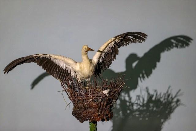 Van'da yaban hayvanları tahnit sanatıyla müzede tanıtılacak - 40