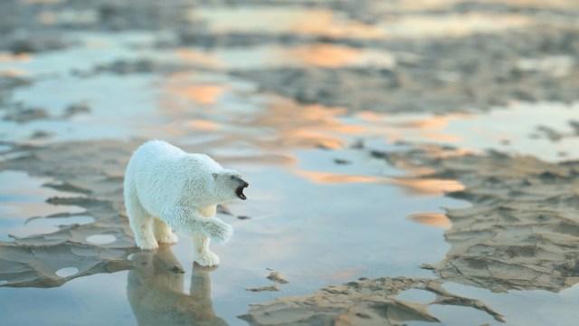 İklim değişikliği ve çevre kirliliği denizlerdeki tüm memeli türlerin yüzde 25'ini yok etmek üzere - 4