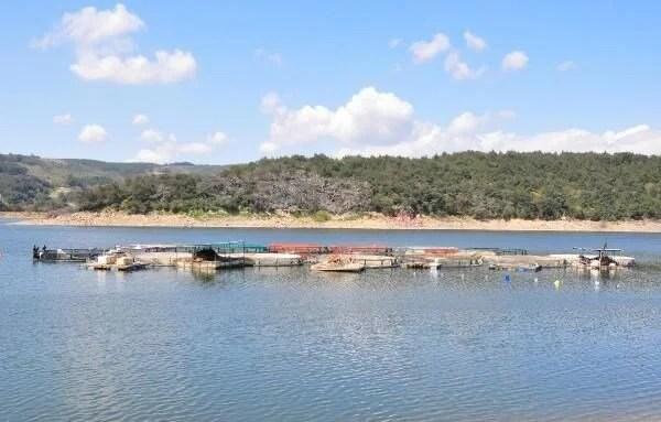 Denizi olmayan Manisa'dan dünyaya balık ihracı - 10