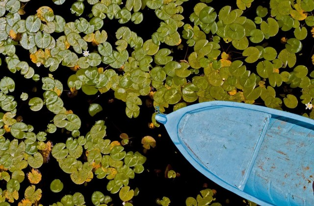 Türkiye'nin en büyük nilüfer bahçesi: Beyşehir Gölü - 14