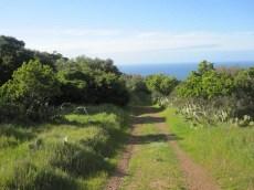 A peaceful trail.